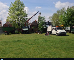 Cedardale Tree Surgeons Guildford